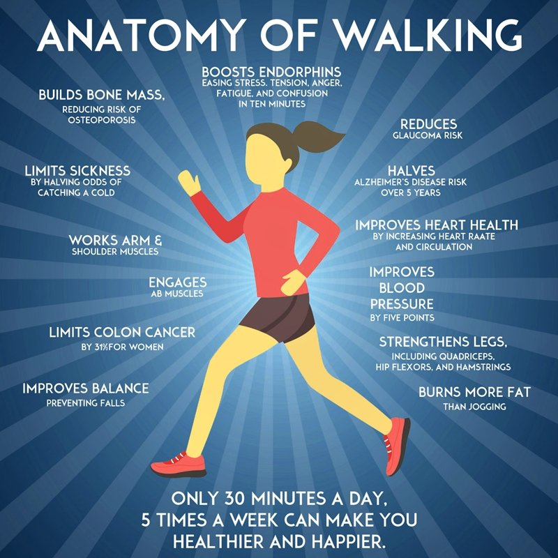 Walking isn't going to build muscle as effectively as other more strenuous exercises. However, a walking routine does help you burn fat and build some muscle, especially in the legs. Walking gives your calves and your thighs quite a workout. It also helps your glutes.