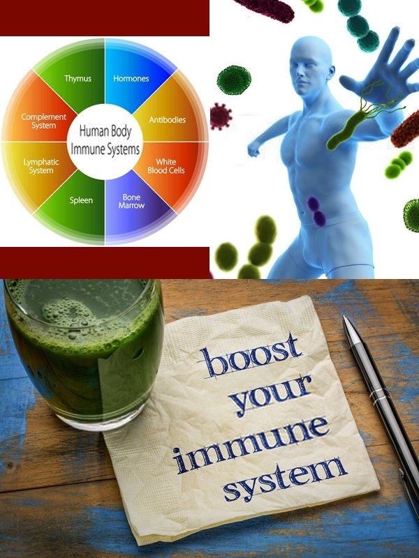 "We hear about the immune system frequently. The ""system"" is your cells, tissues, and organs working like a well-organized team."